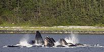 Mendenhall Glacier & Wildlife Quest Juneau, AK