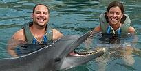 Dolphin Experience King'S Wharf, Bermuda