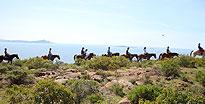 Baja Bandidos Horseback Trail Ensenada, Mexico