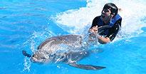 Dolphin Swim Cabo San Lucas, Mexico