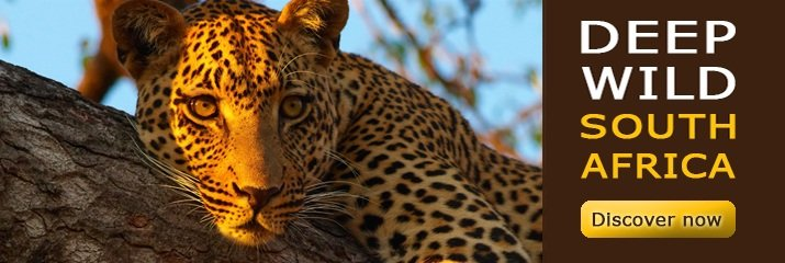 Guided Tours with air transfer - Deep Wild South Africa