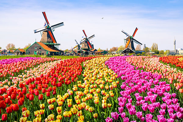 Amsterdam Cruise & Stay Image