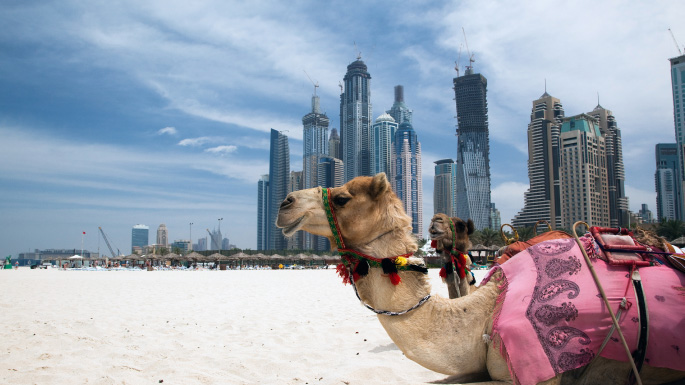Emirates and Dubai cruises; camel