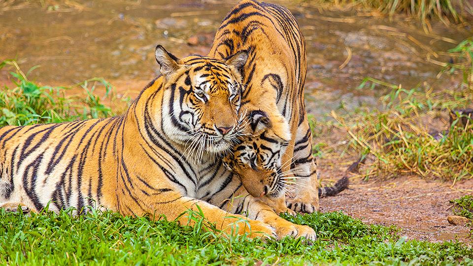 Ranthambore Zoo, India