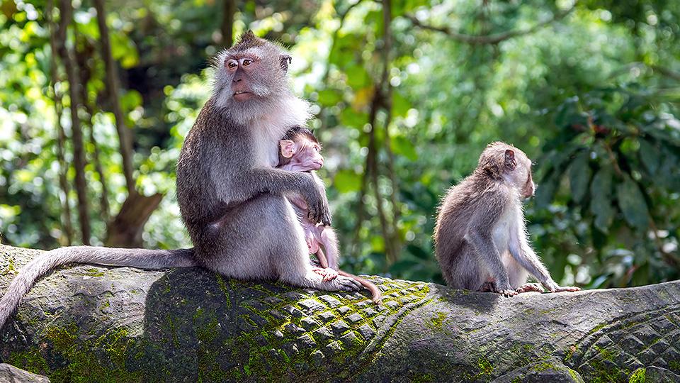 Ubud - Monkey Sactuary