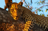 South Africa escorted tours
