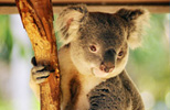 Australia escorted tours