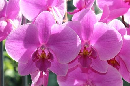 Flower Shows & Gardens »