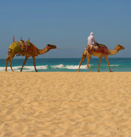 Excursions & things to do in Tunisia