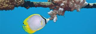 Miles de peces de colores en el mar