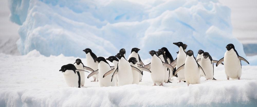 Polar Regions Cruise