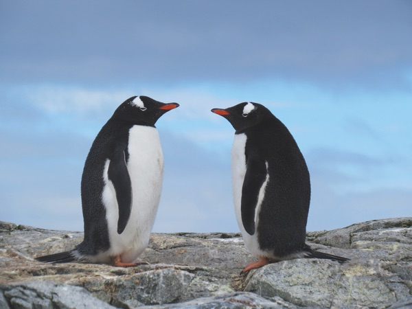 Adventure to Antarctica's Highlights