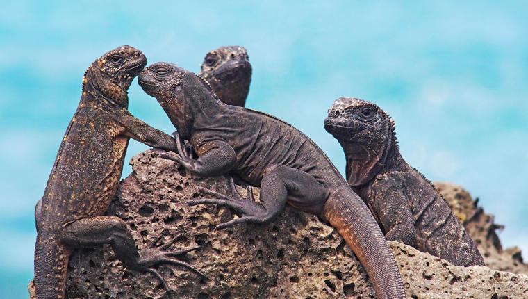 Cruceros por Galápagos, Ecuador