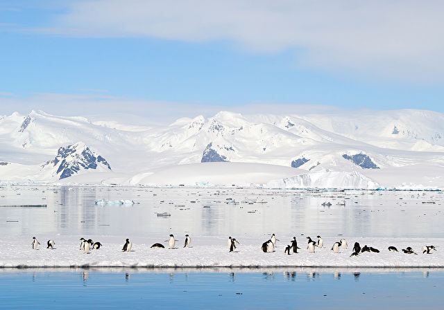 Antarctica, Falklands & the Chilean Fjords