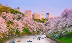 Crucero por Tokio en Japón