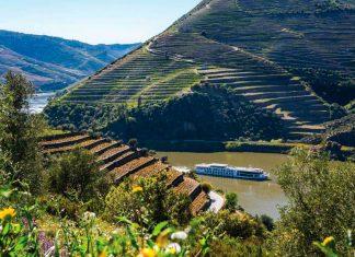 Cruzeiro através da rota dos vinhos é um dos destaques da Uniworld