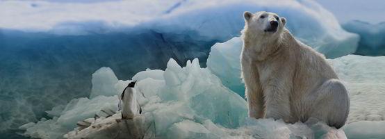 Cruceros de Lujo por la Antártida