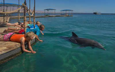 Dolphin Reef, Eilat