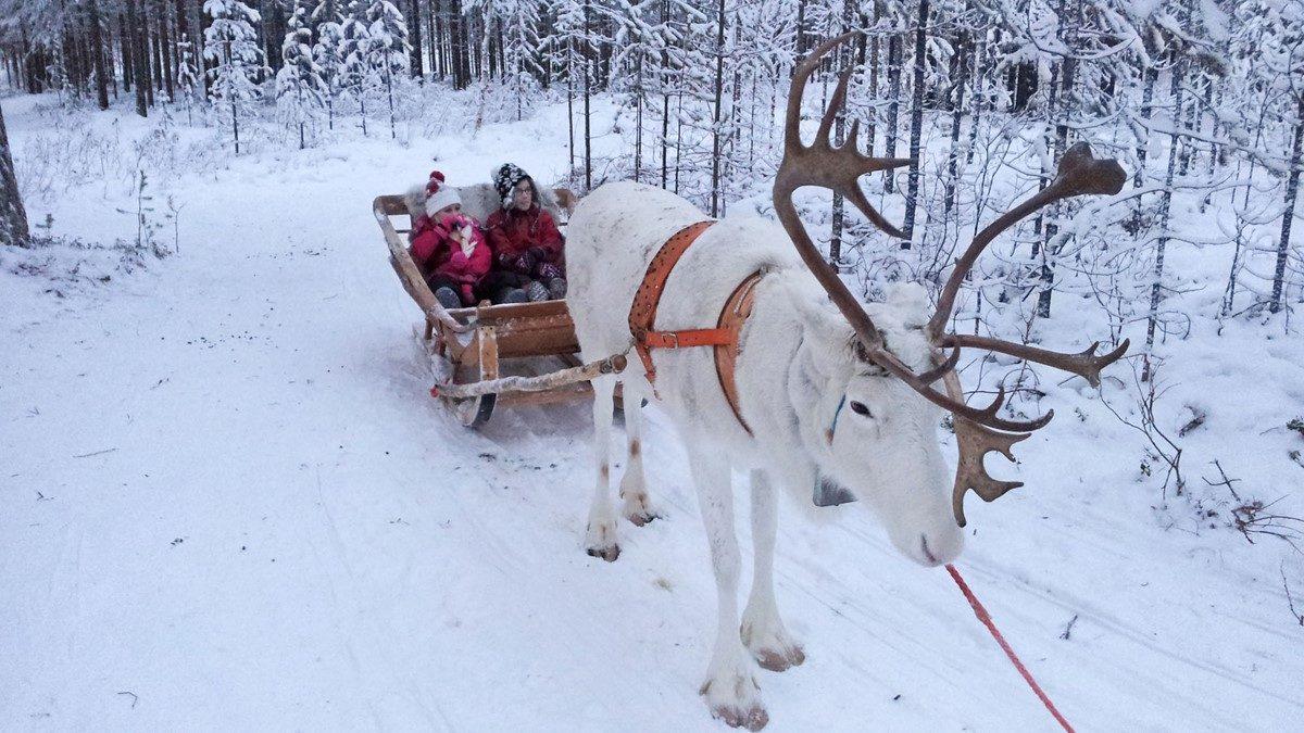 Lapland Day Trip