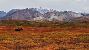 Nat Geo Alaska: Denali to Kenai Fjords Expedition