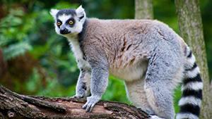 Nat Geo Madagascar Private Expedition