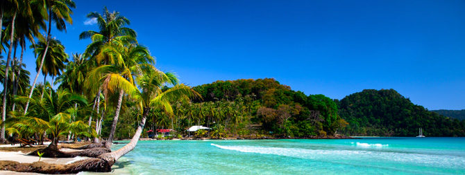 Island with palm trees on the sand and clear blue water