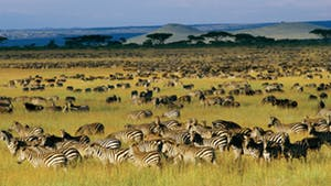 Nat Geo On Safari