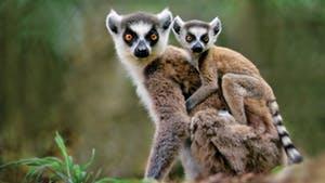 Nat Geo Madagascar Wildlife Expedition