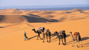 Nat Geo Morocco: Legendary Cities and the Sahara