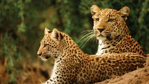 Nat Geo Southern Africa Safari by Private Air
