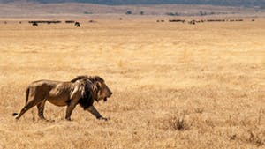 Nat Geo Tanzania Photo Safari