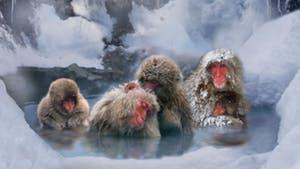 Nat Geo Japan: Winter Festivals and Snow Monkeys