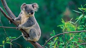 Nat Geo Wonders of Australia and New Zealand
