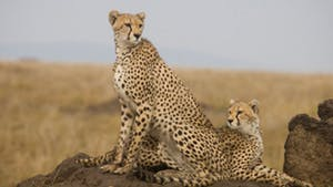 Nat Geo Africa by Private Jet