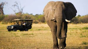 Nat Geo Botswana Private Expedition
