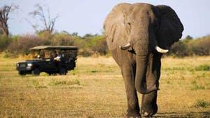 Nat Geo Botswana Private Expedition