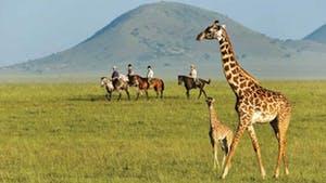 Nat Geo Kenya Private Expedition