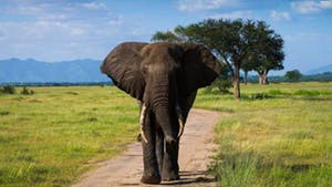 Nat Geo Tanzania Private Expedition
