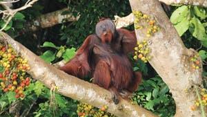 Nat Geo Borneo Private Expedition
