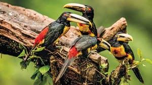 Nat Geo Ecuador Avian Private Expedition
