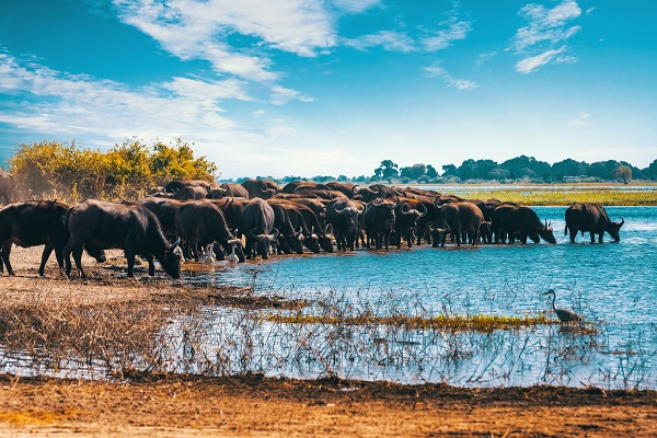 Zambezi Queen, Cape Town, Victoria Falls & Kruger