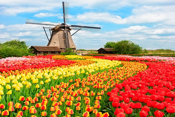 Keukenhof and the Hague