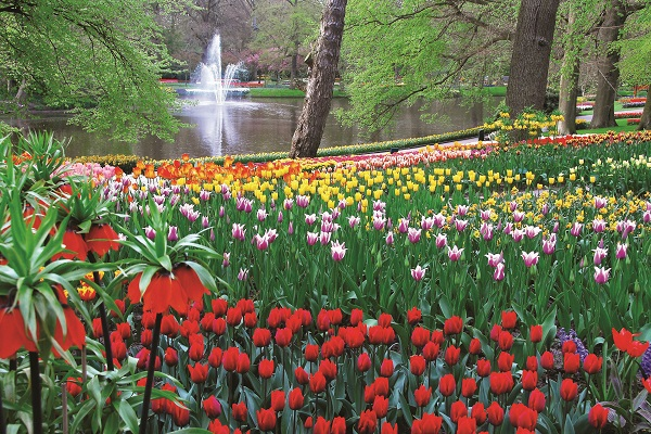 Keukenhof and Springtime in Holland