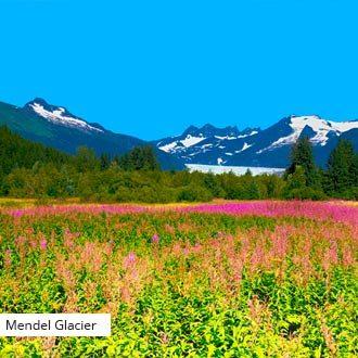 Alaska Mendel Glacier